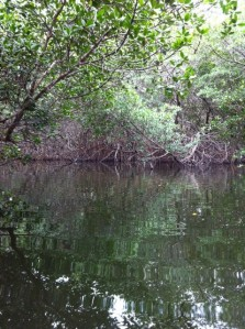I explored a water trail through the mangroves.