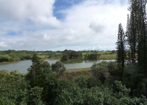 Kauai-Beautiful Tree Top View