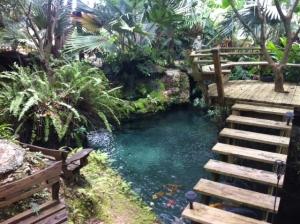 Koi Gardens